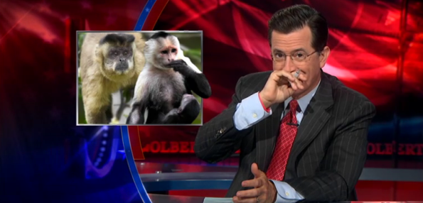 Stephen Colbert on Monkey Vagina's